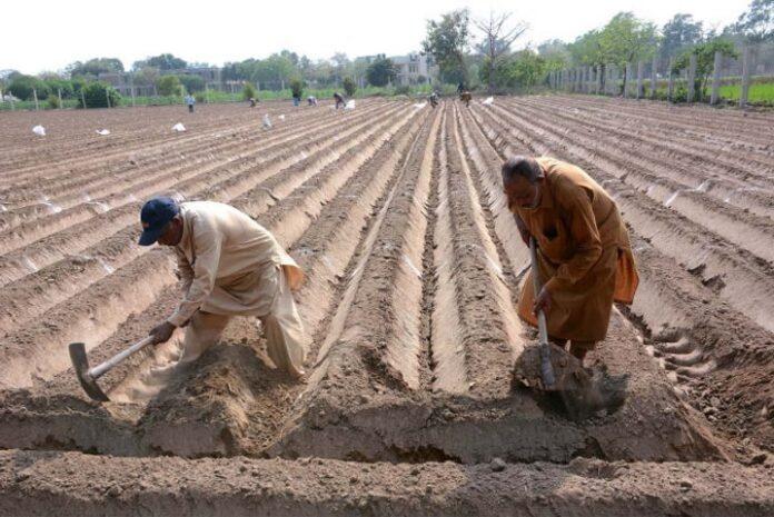 Govt prepares comprehensive NAP to modernise agriculture sector under CPEC 1